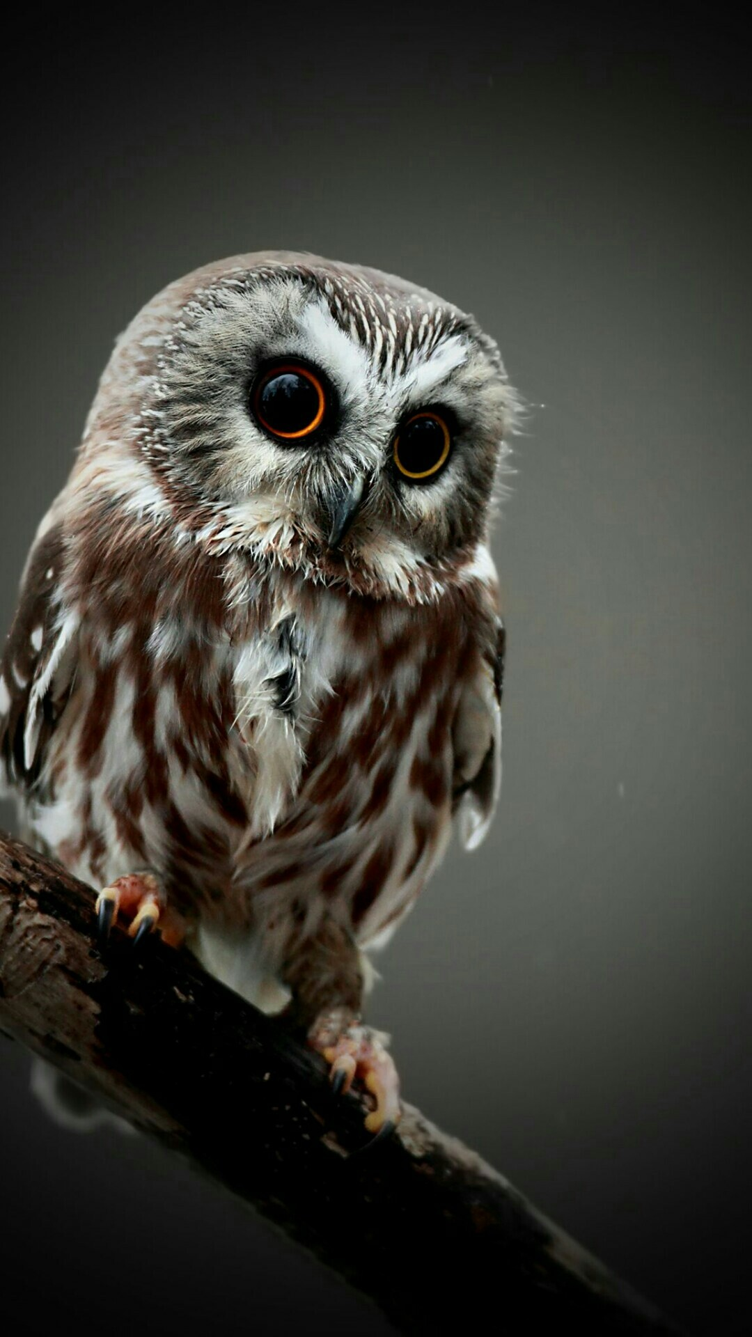 Cute Owl Wallpaper 66 images