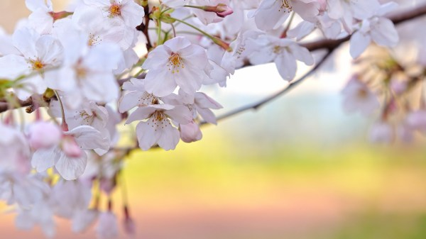 Spring Desktop Backgrounds Wallpapers (75+ images)