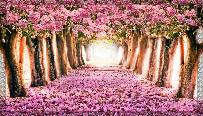Free Spring Wallpapers For Computer Allofthepicts Com