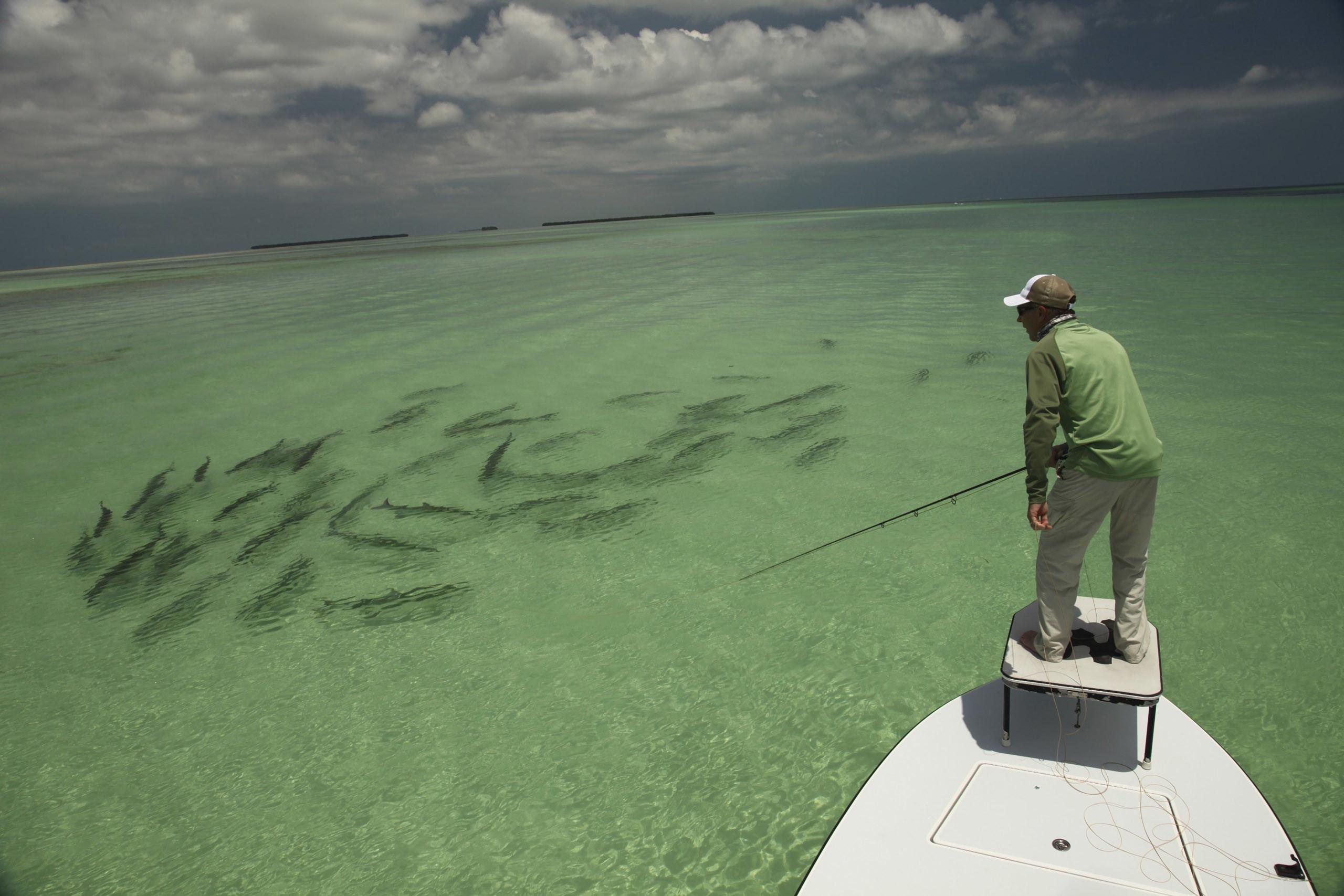 Saltwater Fishing Wallpaper 63 Images