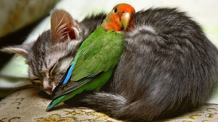 Love Bird Wallpapers Livingfur23 Com