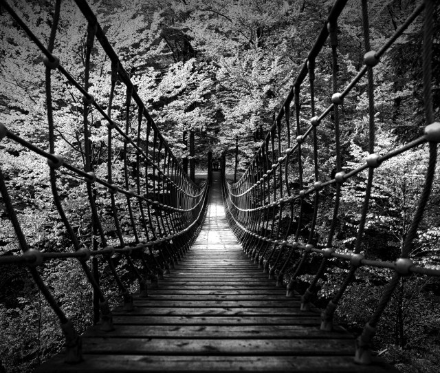 1920x1200 Black White B W Landscapes Nature Wood Rope Scary Bridges Trees Forest
