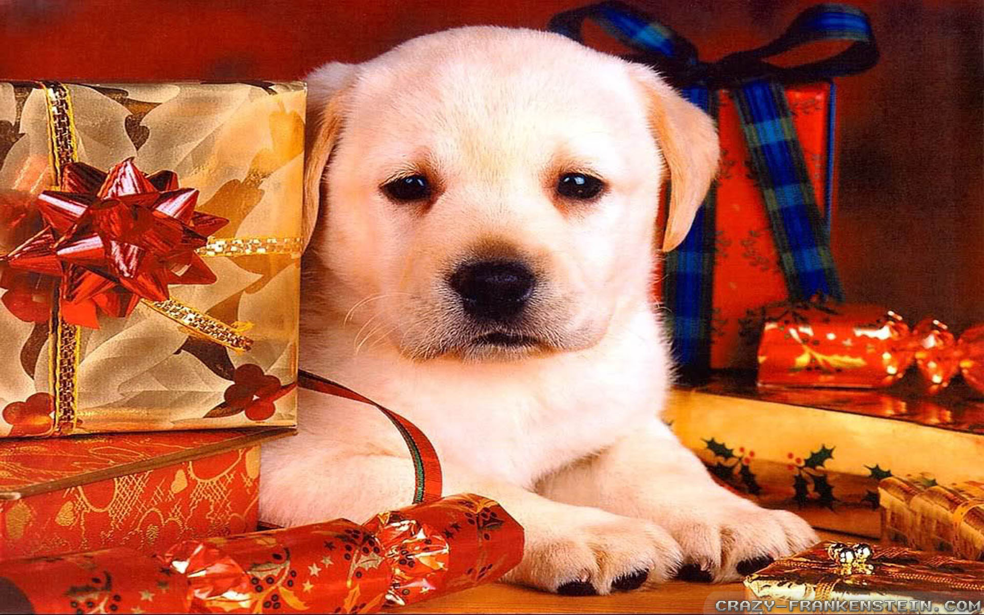 Free Christmas Dogs Wallpaper | Imagewallpapers.co