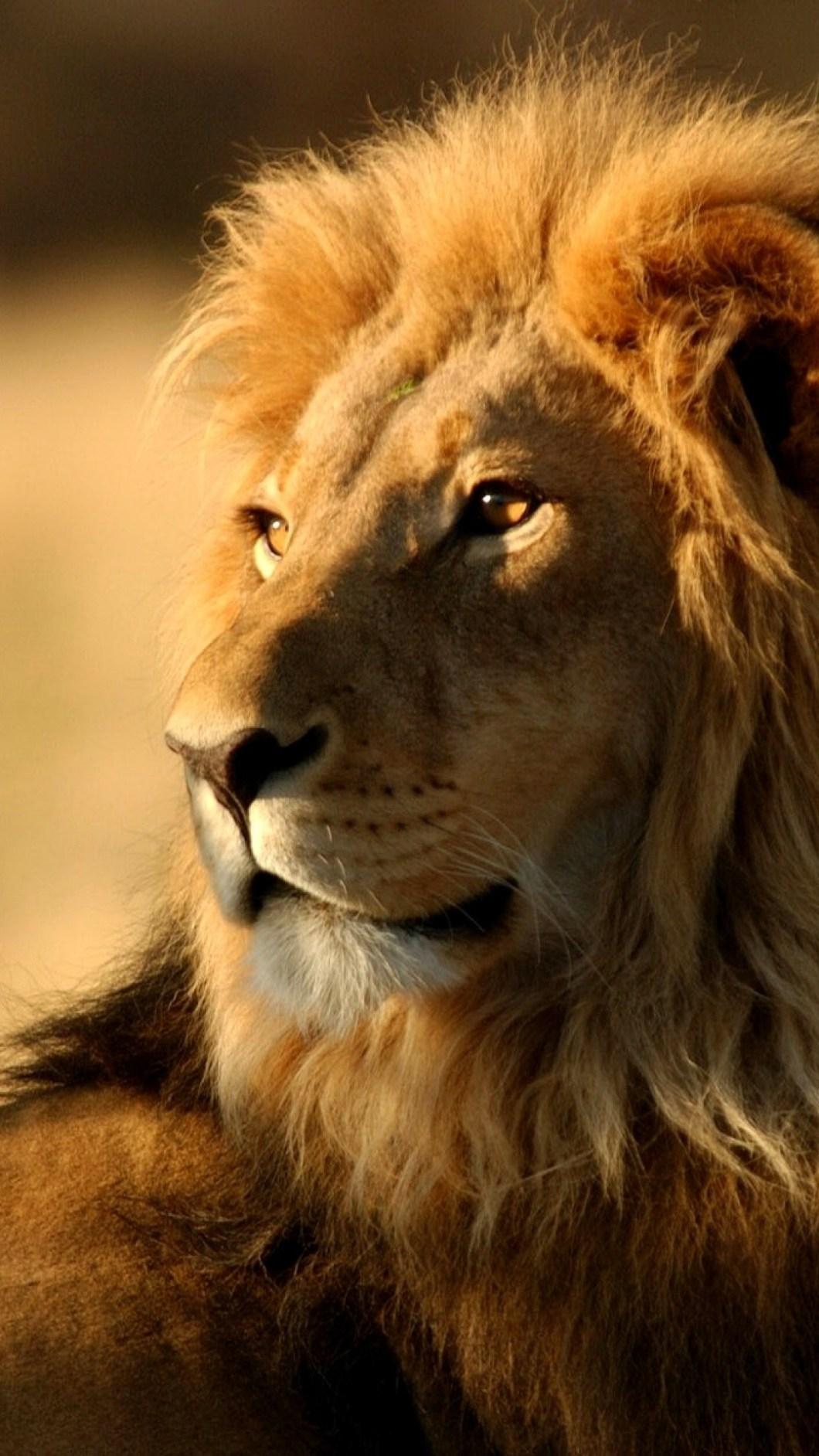 lion wallpaper hd 1080p iphone | gendiswallpaper