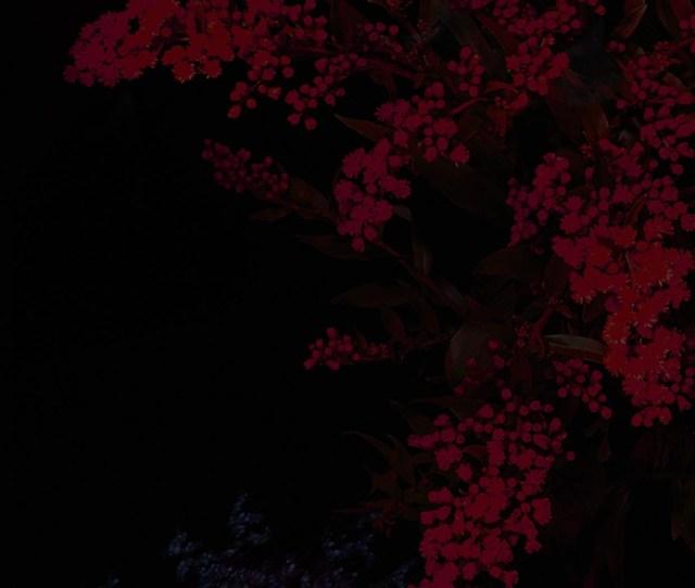 1080x1920 Dark Flower Texture Htc One M8 Wallpaper Dark Flower Wallpaper 70 Images