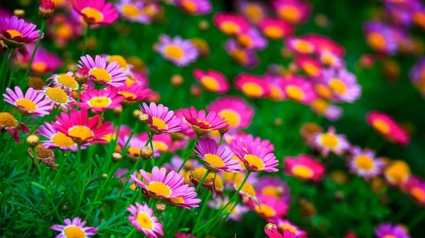 Beautiful Flowers Wallpaper (60+ images)