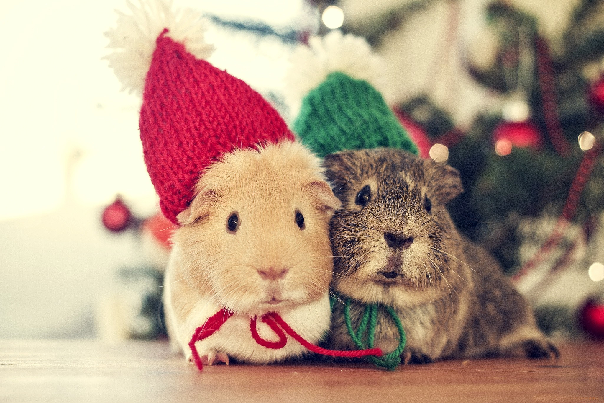 Christmas Animal Wallpaper  67  images  2048x1365 Christmas Animals Cute Winter Cold Cozy Couple Holiday Mouse  wallpaper