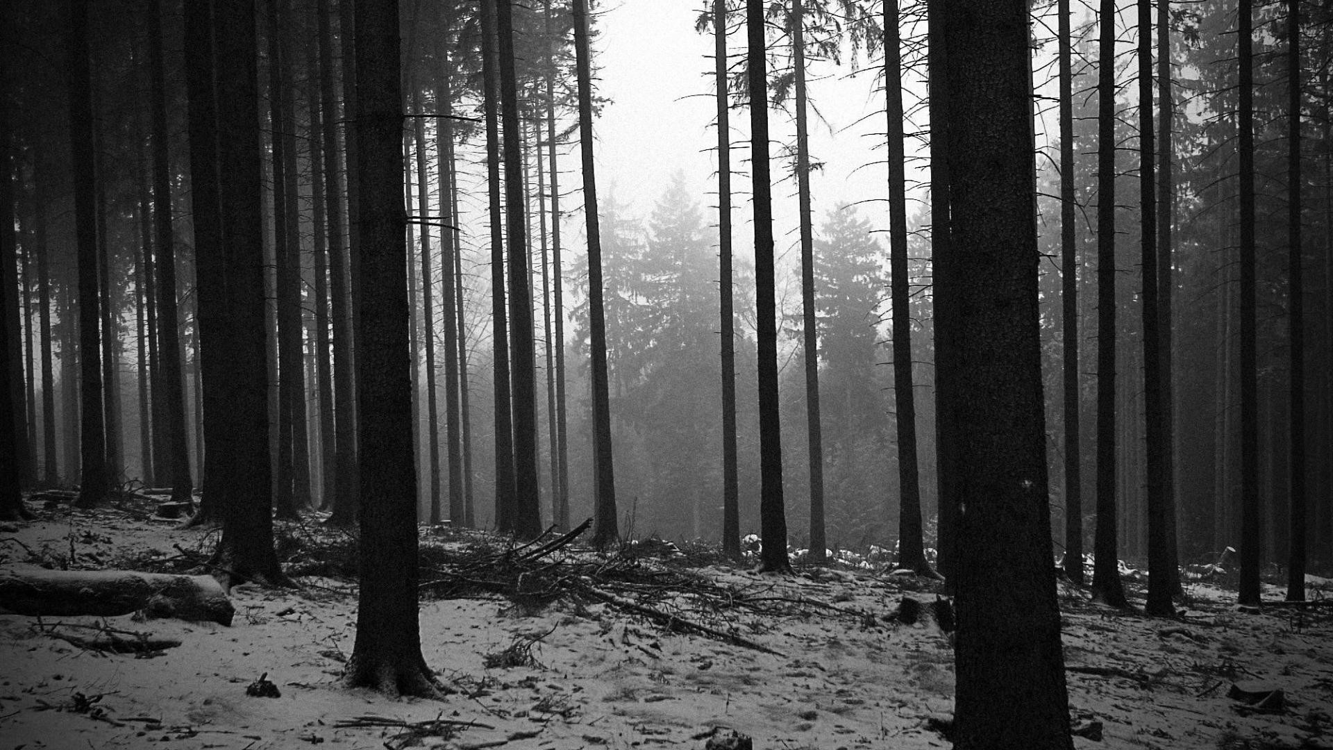 Image result for black and white forest