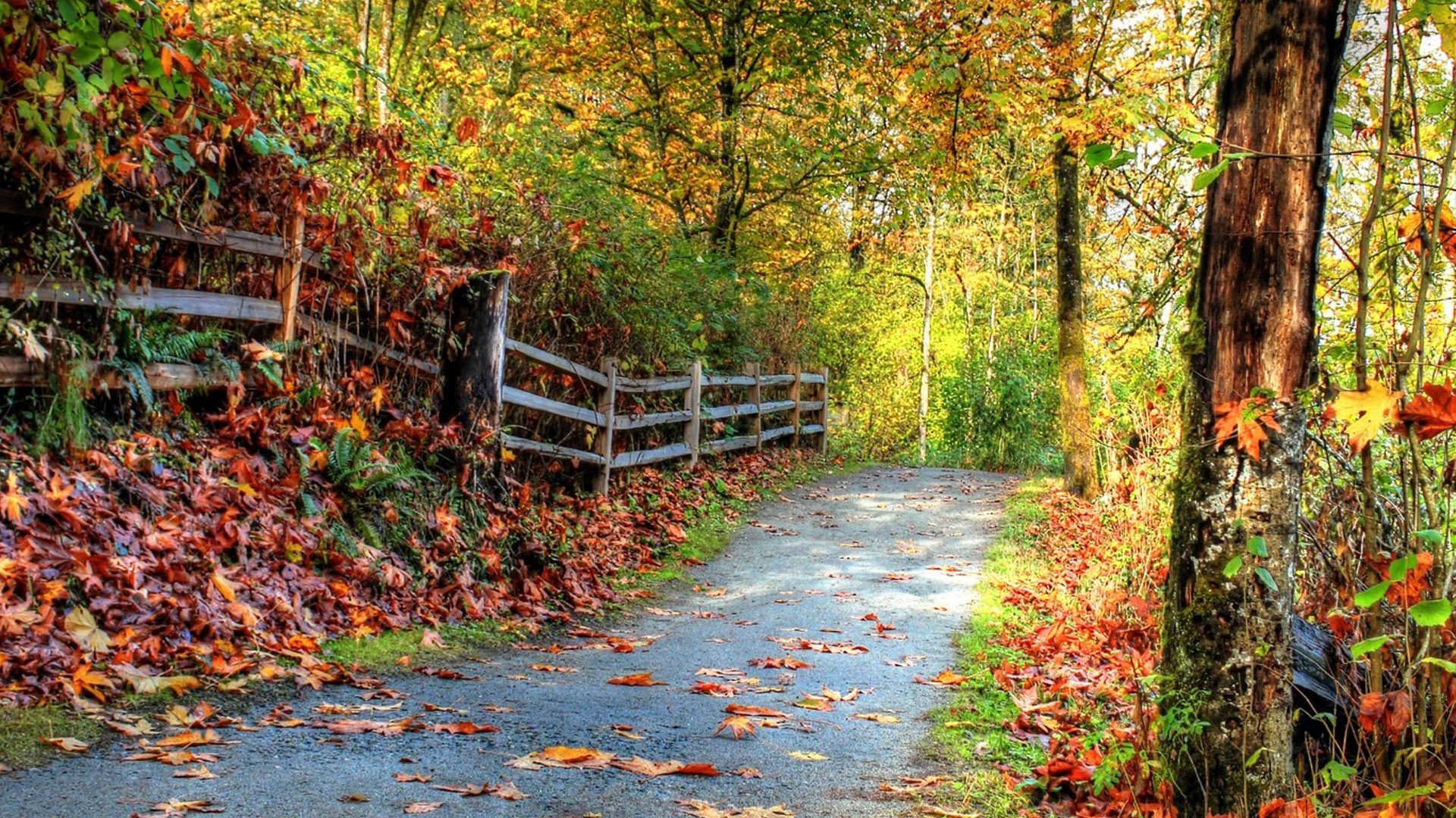 Dslr Blur Nature Background Hd  Kapokto