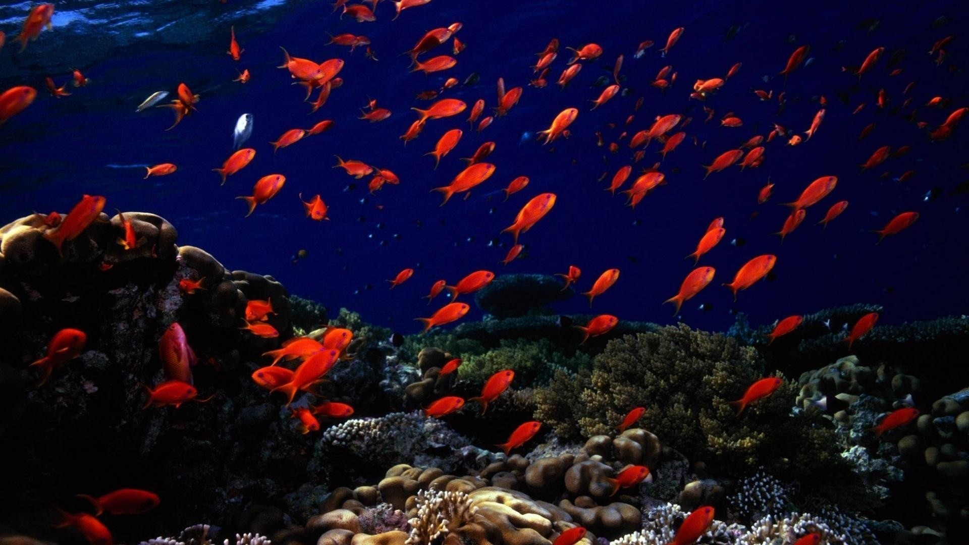 underwater hd wallpapers 1920x1080 (79+ images)