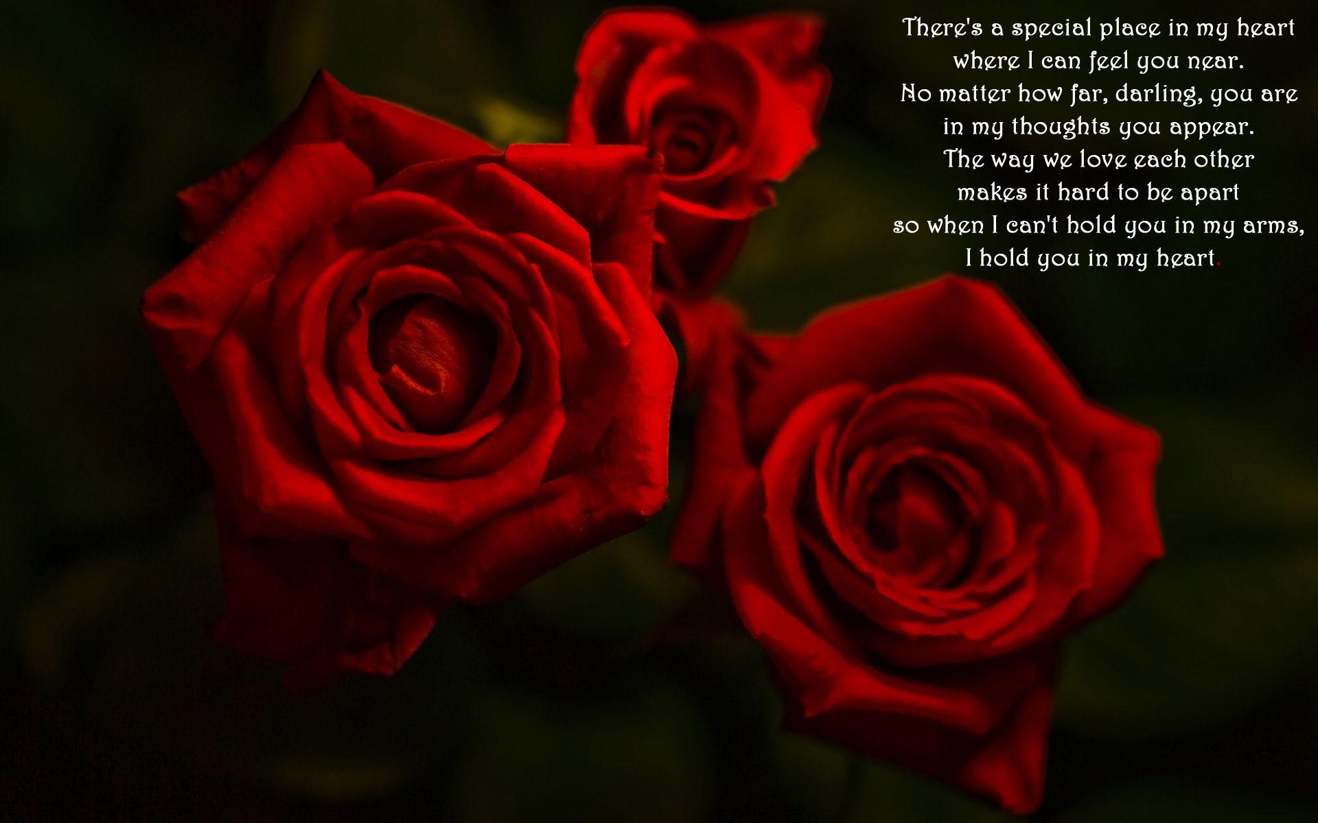 Red Rose Love Wallpaper 55 Images