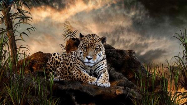 HD Animals Wallpaper (71+ images)