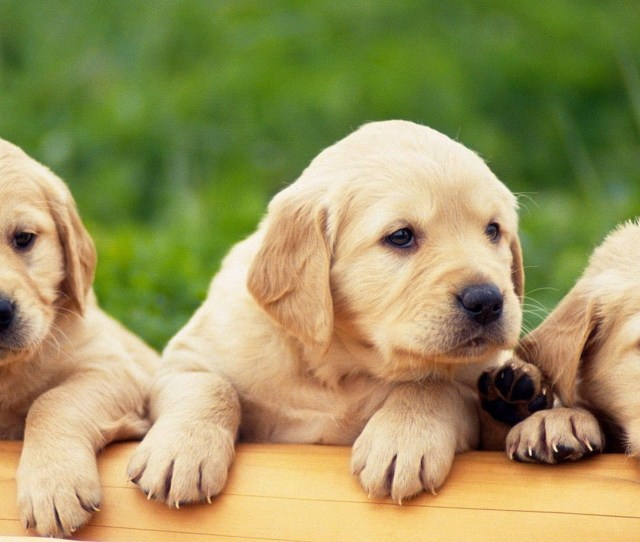 X Cute Puppy Wallpaper  Wallpapers