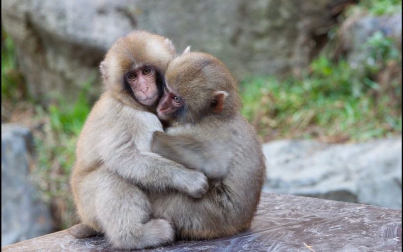Cute Monkey Wallpaper 50 Images