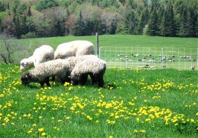 Farm Share 6