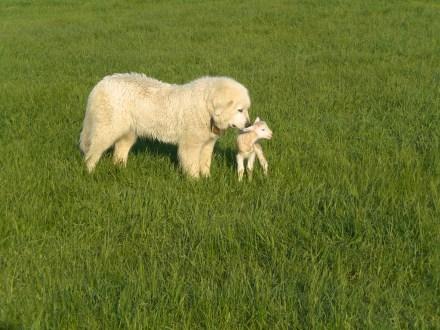 Emma protecting new baby