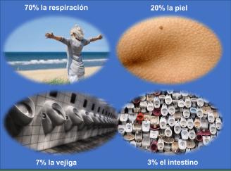 eliminacion_toxinas