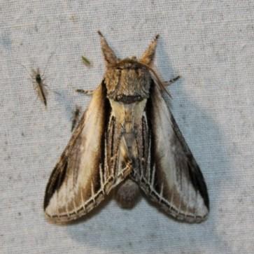 Nachtvlinder1 (Small)