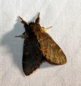 Nachtvlinder8 (Small)