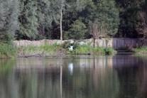 Witte reiger - kopie (2) (Small)