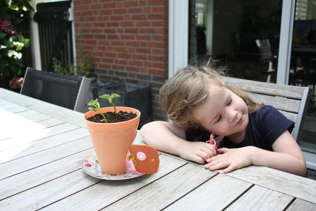 my-fairy-garden-flowerpot-5