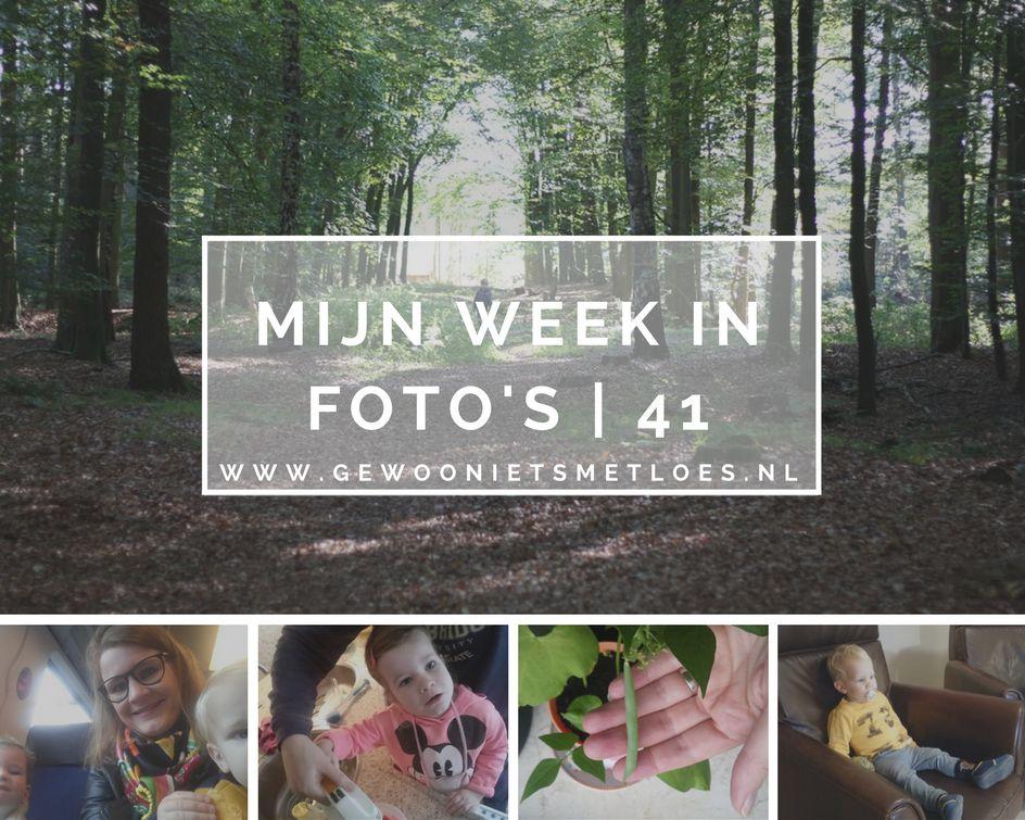 week in foto's 41