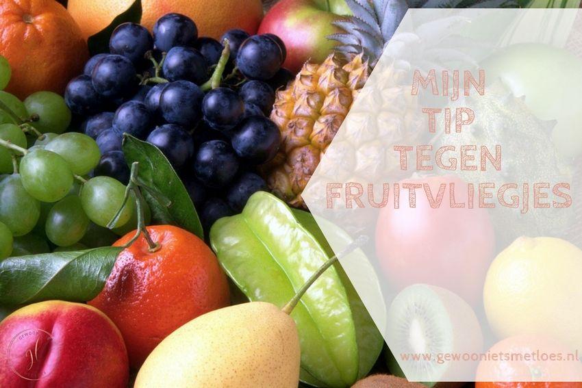 [:nl]Mijn tip tegen fruitvliegjes | Huishouden[:]