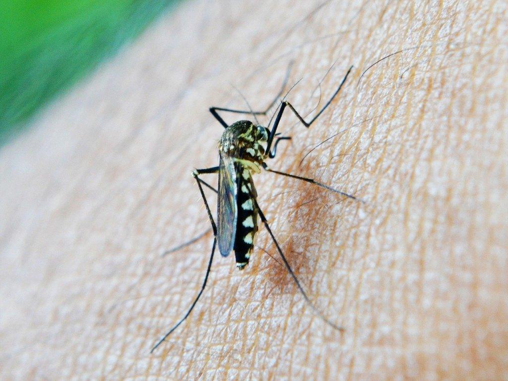 anti muggen creme