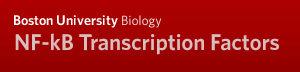 Boston University Biology NF-kB