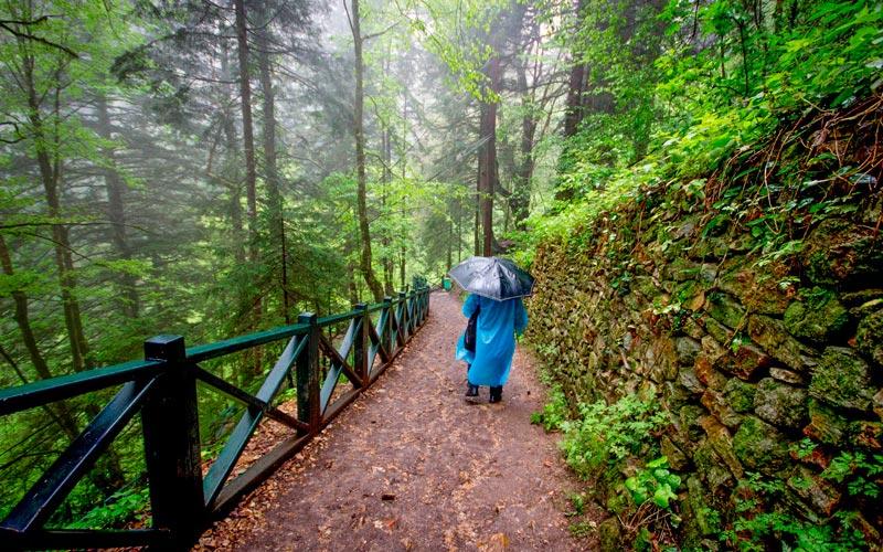 Trabzon-gezilecek-yerler-Altındere-Vadisi