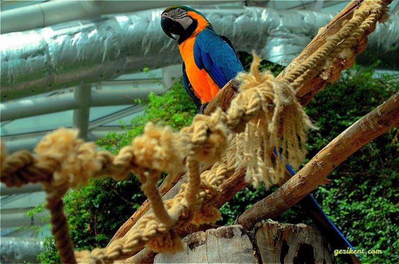 Tropikal kelebek bahçesi papağanlar