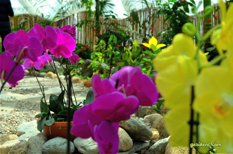 Tropikal kelebek bahçesi