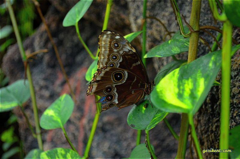 Tropikal kelebek bahçesi giriş ücreti nekadar