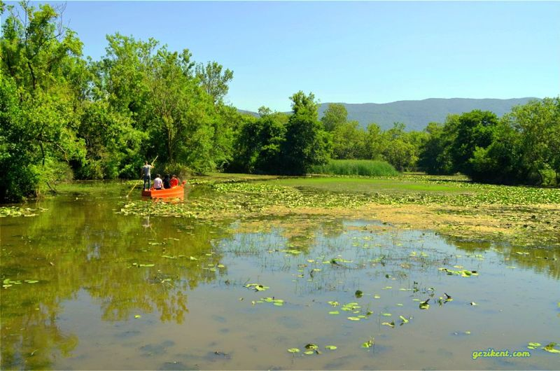 karacabey longoz ormanları gölet