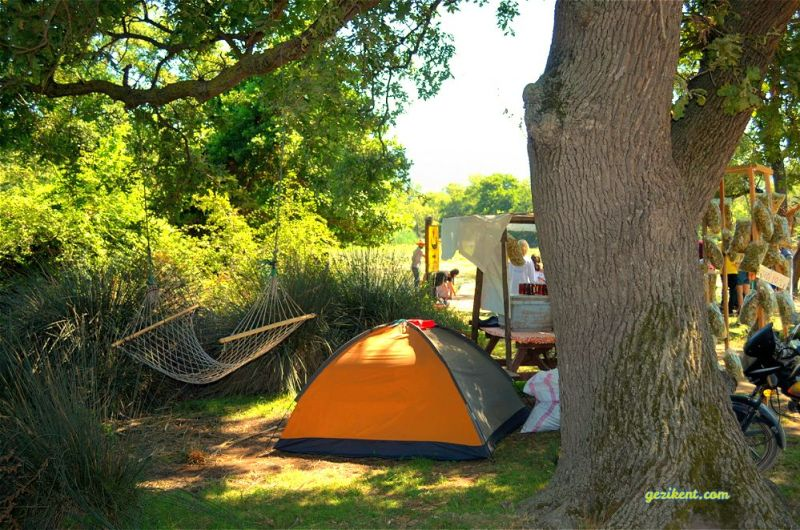 Karacabey longoz ormanlarında kamp