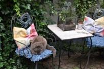 Kediler bile huzurlu