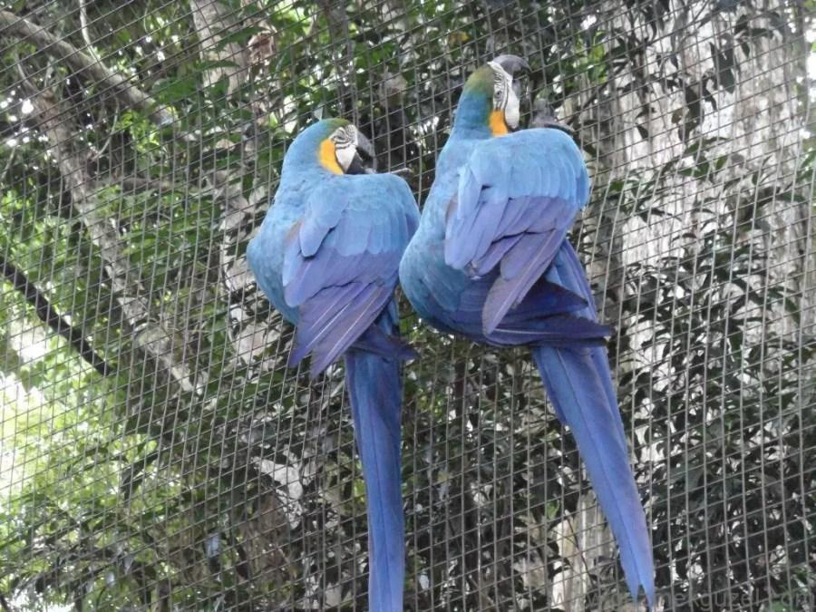 Foz do Iguaçu Kuş Parkında, Iguazu Şelaleleri, Brezilya Gezisi Notları