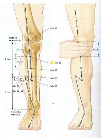 maag36-misselijkheid.buikpijnimmuunsysteem-hoofdpijnstressvermoeidheid-acupressuur