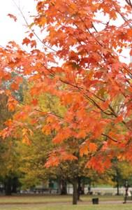 Boston Common Leaves
