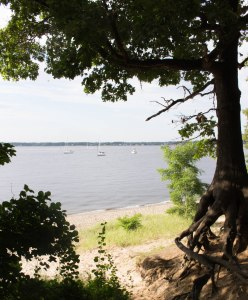 Boats through Trees
