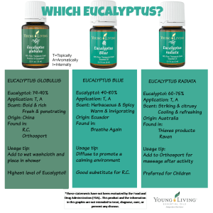 Which Eucalyptus Essential Oil?
