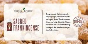 sacred-frankincense