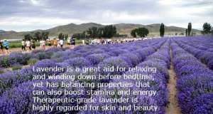 St. Maries Lavender Farm
