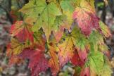 ga-hwy-356-maples-white-county-10-26-16.jpg