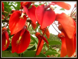 The most beautiful, exotic flowers in Yunnan