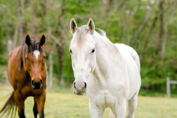 content creation for equestrians, equine marketing, equestrian marketing