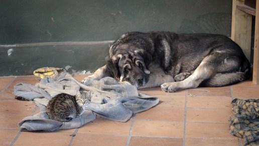 Aquí, más que a Gato, se puede ver la ninguna influencia que ejerce en la vida del resto de bichos de mi casa. Ese es Wilki.