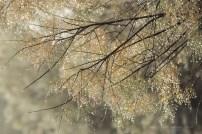 Rocío en las hojas, finas como agujas.