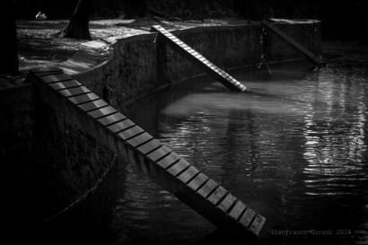 Puentes para patos, sip.