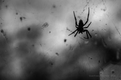 Araña que me acompaña